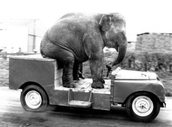 Elephant Land Rover